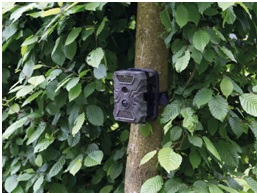 CAMCOLVC26 Wildlife camera